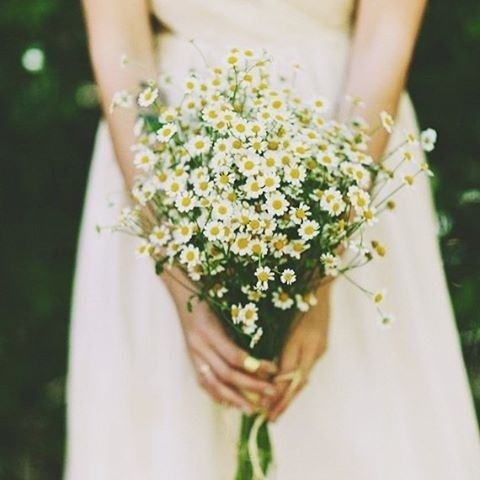 ideias ramos noiva margaridas